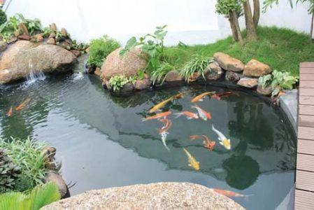 chống thấm hồ cá tphcm