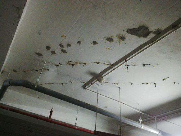 chống nứt mái nhà