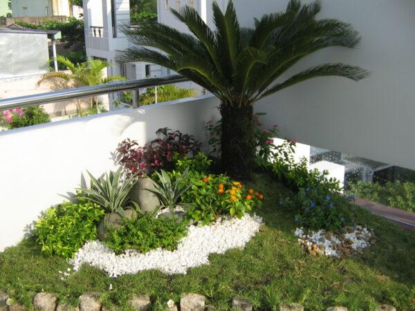 trồng cây cảnh trên sân thượng