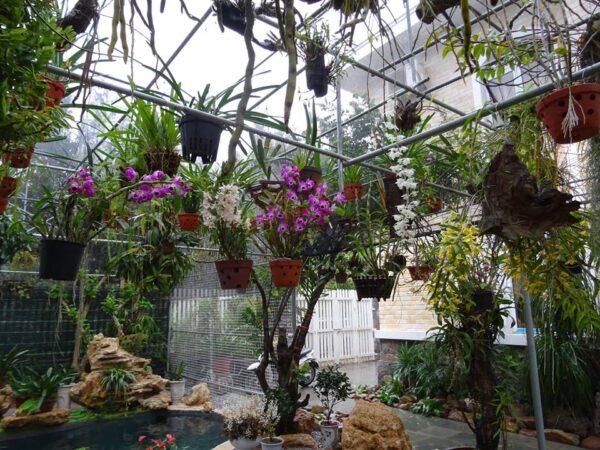 trồng hoa lan trên sân thượng