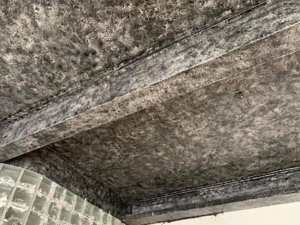 sơn giả xi măng trần nhà