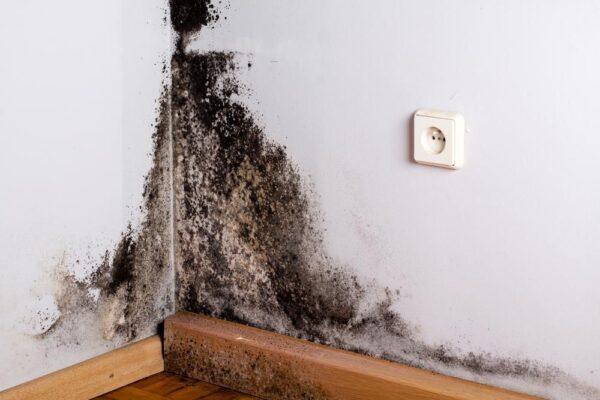 tường nhà ẩm mốc